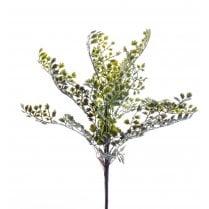 Adianthus Bush