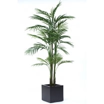 Areca Palm set in white or black cube planter