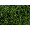 Artificial Boxwood Hedge on legs