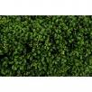 Artificial Boxwood Hedge set in Fibreglass Trough