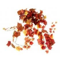 Autumnal Leaf Trailing Plant