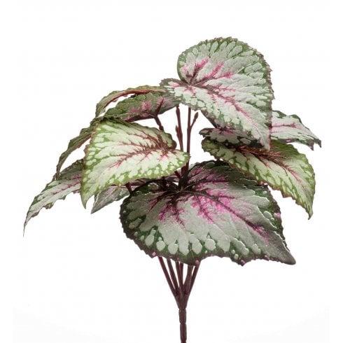 Begonia Bush