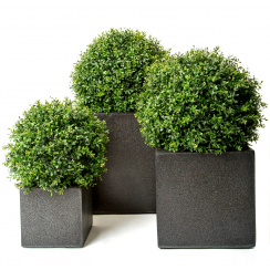 Boxwood Ball set in a Fibreglass Cube Planter
