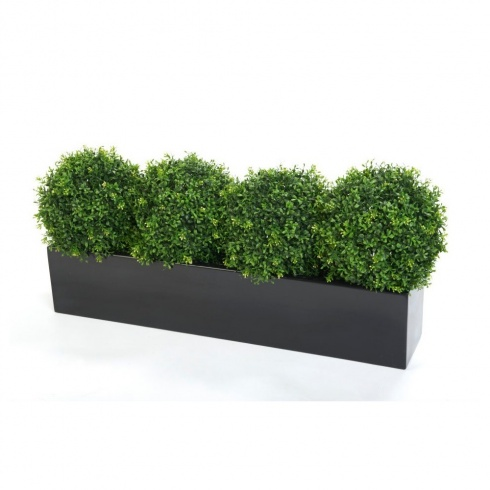 Boxwood Balls set in a fibreglass trough