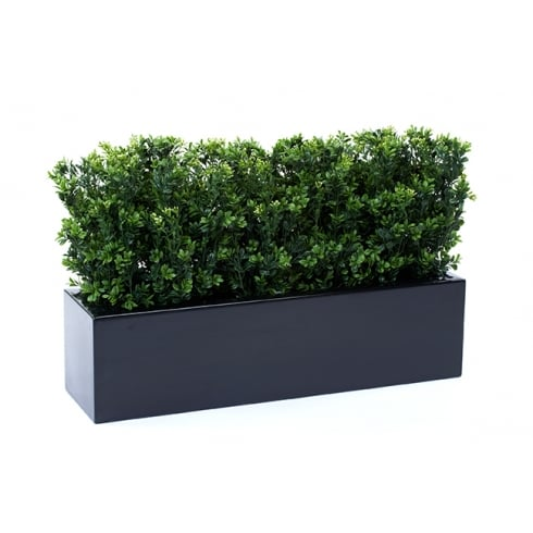 Boxwood Bushes set in a fibreglass trough
