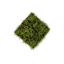 Brown Mat and Green Moss Wall Mat