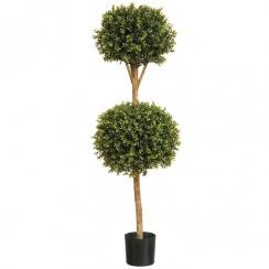 Buxus Double Ball Tree