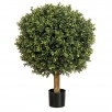Buxus Low Ball