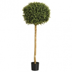 Buxus Single Ball Tree