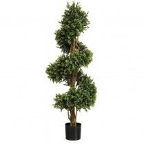 Buxus Spiral Tree