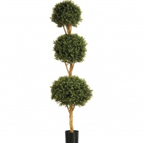 Buxus Triple Ball Tree