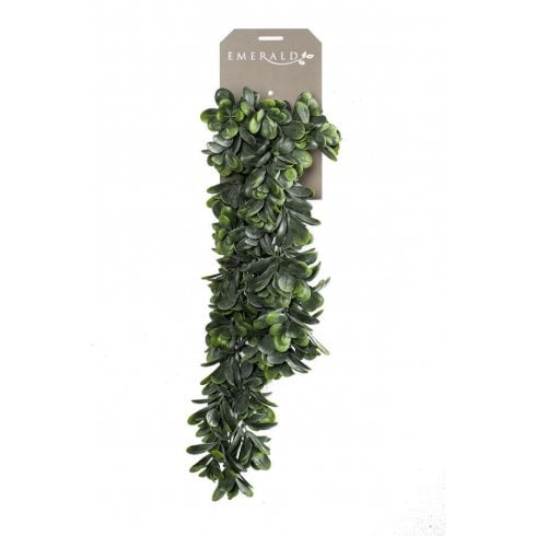Crassula Hanging Trail