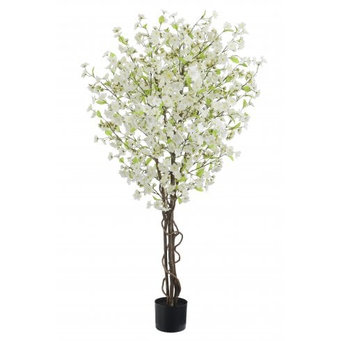 Cream Cherry Blossom Tree