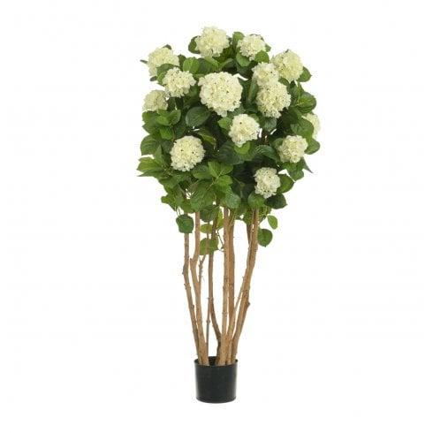 Cream Hydrangea Tree