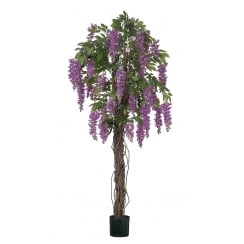 Cream or Purple Wisteria