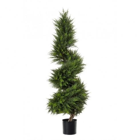 Cypress Conifer Spiral