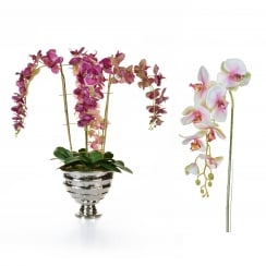 Deep, Pale Pink or White Orchid Arrangement in silver vase