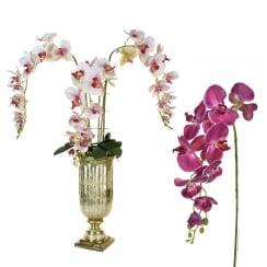 Deep, Pale Pink or White Orchid Urn Arrangement
