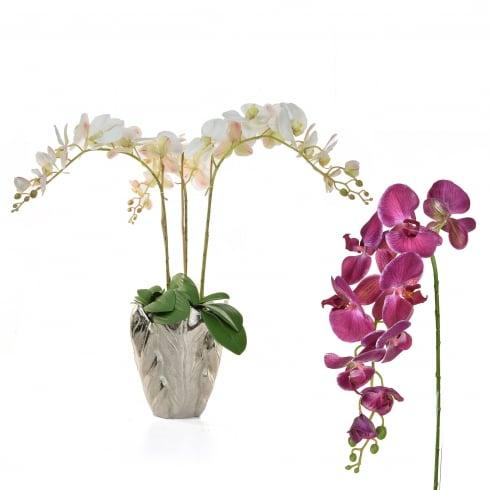 Deep, Pale Pink or White Orchid Vase Arrangement