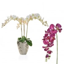Deep, Pale Pink or White Orchid Vase Arrangement
