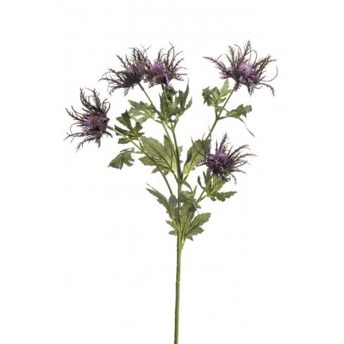 Eryngium in Green or Purple