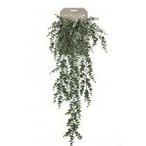 Eucalyptus Trailing Plant