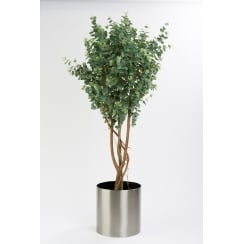 Eucalyptus Tree set in a brushed stainless planter