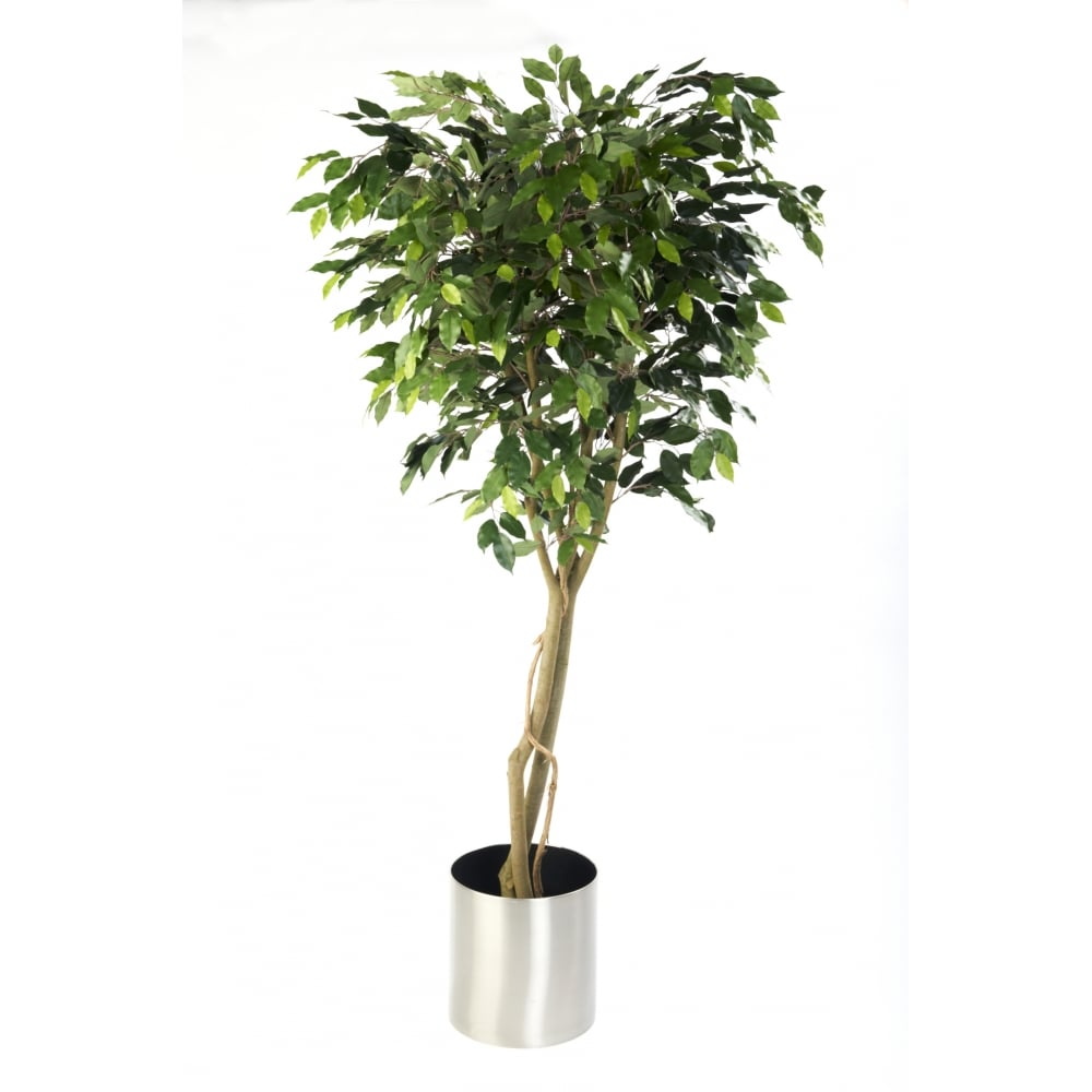 artificial ficus tree benjamina ficus plant suitable for weddings. Black Bedroom Furniture Sets. Home Design Ideas