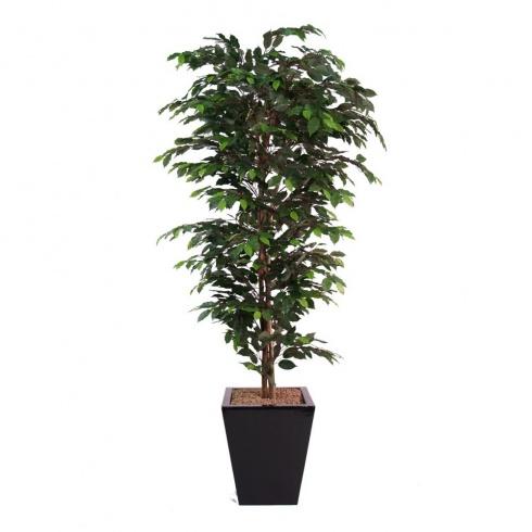 office tree. Ficus Premium Bush Set In Contemporary Planter Office Tree