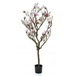 Flowering Magnolia Tree