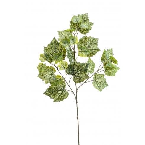 Grape Ivy Leaf Spray