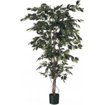 Green Leaf Ficus Tree