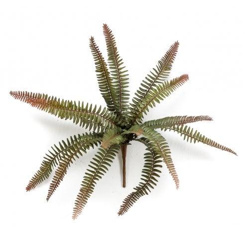 Green or Brown Fern Bush