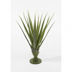 Green or Burgundy Medium Pandanus