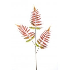 Green or Red Tree Fern