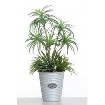 Green Yucca in Silver Metal Vase