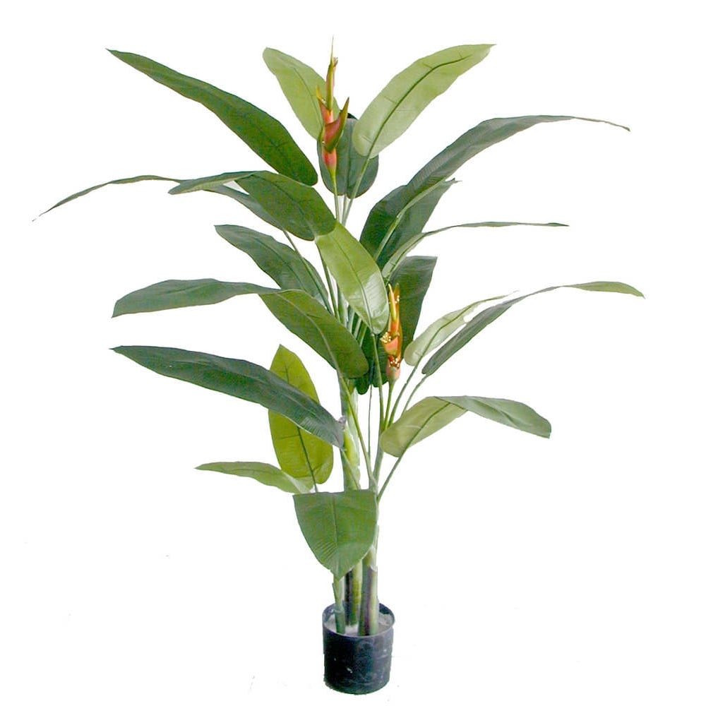 outdoor planters product with Heliconia Plant P2 on Bulbs as well 65 Arcola Acrylic Freestanding Tub in addition Ghaf likewise Fanta Pencil Case 3171643 furthermore Heliconia Plant P2.