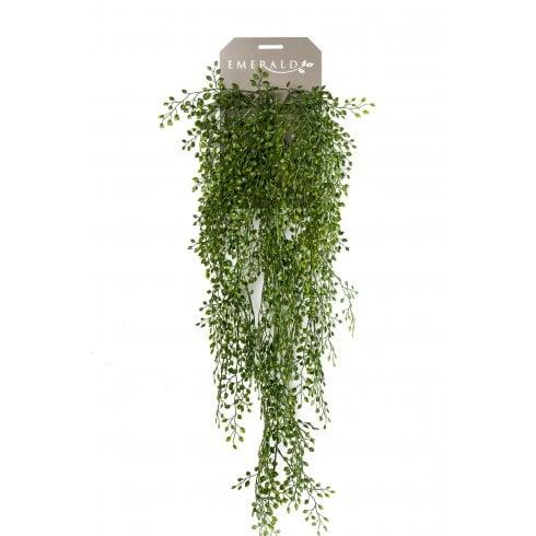 Jasmine Mini-Leaf Trailing Plant