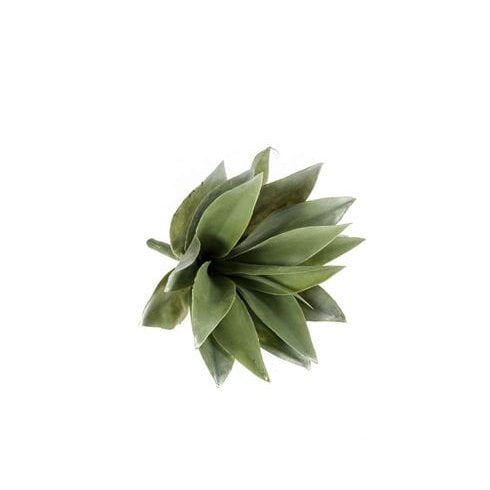 Large Succulent Picks