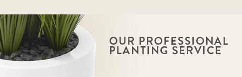 Our Professional Planting Service
