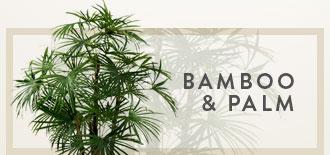 Bamboo & Palm