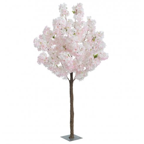 Pale Pink or Cream Blossom Tree
