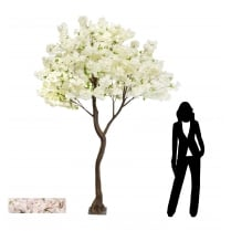 Pale Pink or Cream Large Cherry Blossom Tree