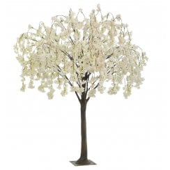 Pale Pink or Cream Trailing Blossom Tree