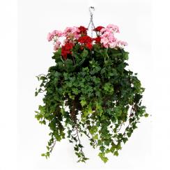 Pink & Red Geranium Hanging Basket