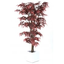 Red Aralia Tree set in a Black or White Cube Planter