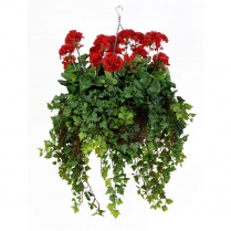 Red Geranium Hanging Basket