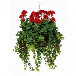 Red Geranium Hanging Basket