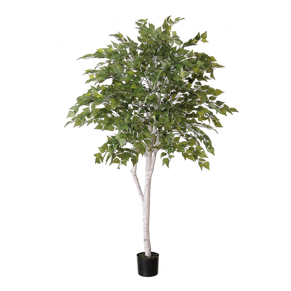 artificial bonsai trees uk with Silver Birch Tree P40 on Artificial Boxwood Hedge Set In Fibreglass Trough P66 also Ficus Benjamina Tree In Green Or Variegated Leaf P45 additionally VCK3066 A806386 likewise Aloe Vera 2ft 4 P33 likewise Gestalten Eigenen Steingarten.