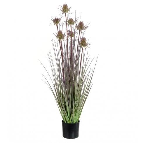 Thistle Grass